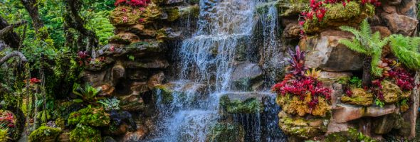 Your Daily Groove – Let Beauty Flow